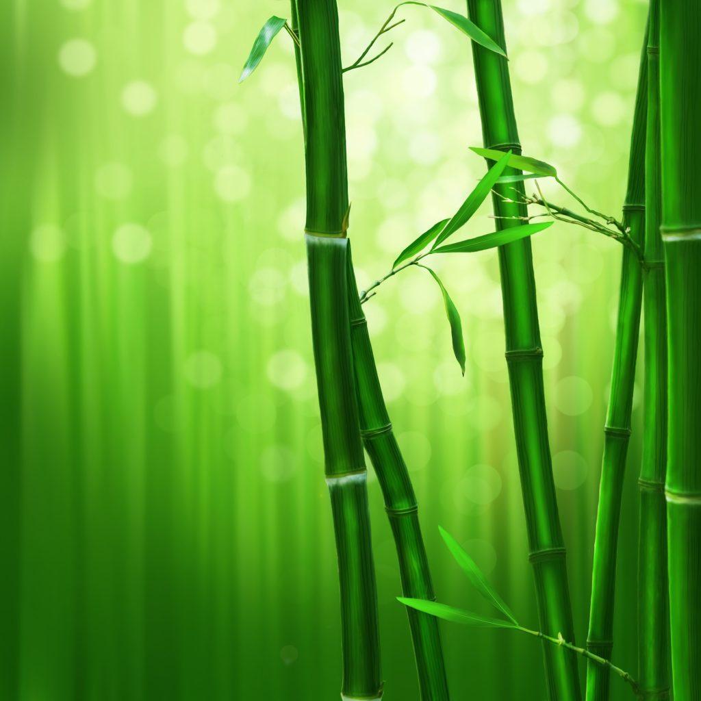 bamboo-1045972_1920-1024×1024