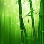bamboo-1045972_1920-150×150