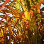 bamboo-93289_1280-150×150